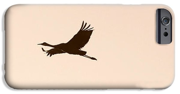 Animals Photographs iPhone Cases - Soaring Sandhills Silhouette iPhone Case by Carol Groenen