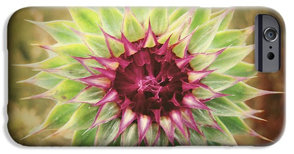 Thistle iPhone Cases - Soft As a Thistle iPhone Case by Amy Tyler