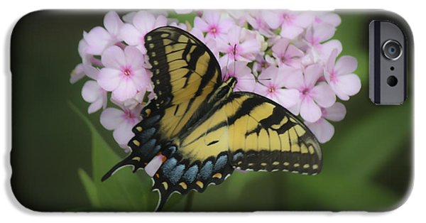 Phlox iPhone Cases - Soft Focus Tiger Swallowtail iPhone Case by Teresa Mucha
