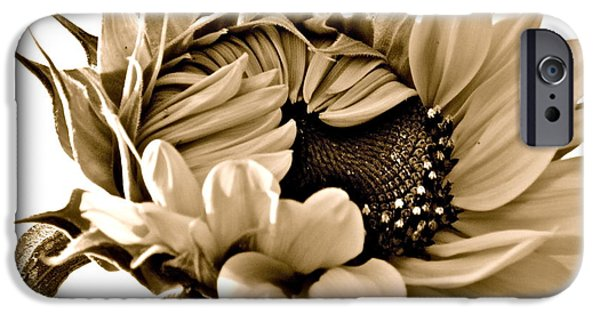 Sunflower Photograph iPhone Cases - Sophisticated iPhone Case by Gwyn Newcombe