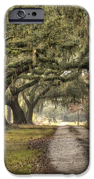 Live Oaks iPhone Cases - Southern Drive Live Oaks and Spanish Moss iPhone Case by Dustin K Ryan