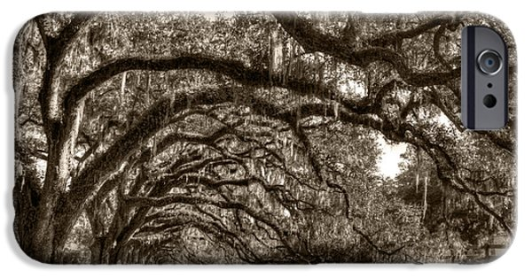 Live Oaks iPhone Cases - Southern Live Oaks with Spanish Moss iPhone Case by Dustin K Ryan