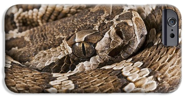 Serpent iPhone Cases - Southern Pacific Rattlesnake, Crotalus iPhone Case by Jack Goldfarb