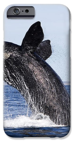Southern Right Whale iPhone Case by Francois Gohier and Photo Researchers