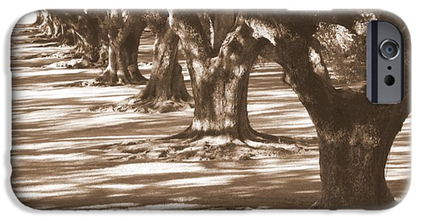 Tree Roots iPhone Cases - Southern Sunlight on Live Oaks iPhone Case by Carol Groenen