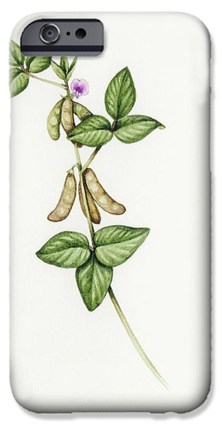 Soybean (glycine Max) iPhone Case by Lizzie Harper