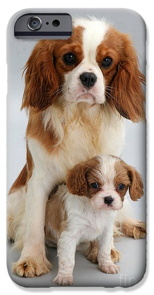 Spaniels iPhone Case by Jane Burton
