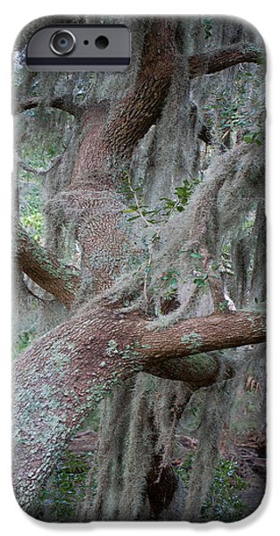 Forest iPhone Cases - Spanish Moss iPhone Case by Mary Sparrow