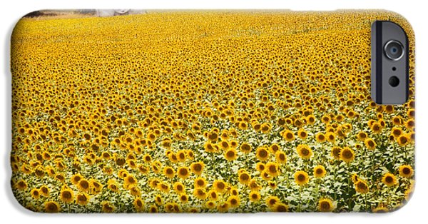 Malaga iPhone Cases - Spanish Sunflowers iPhone Case by Mal Bray