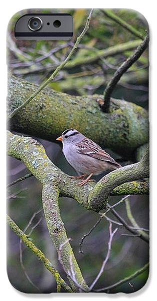 Sparrow Bird Perched . 40D12307 iPhone Case by Wingsdomain Art and Photography