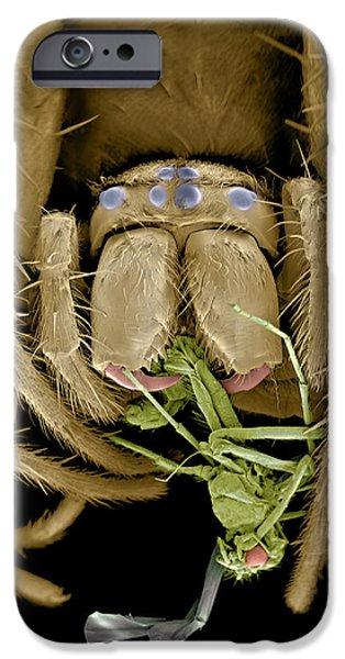 Eating Entomology iPhone Cases - Spider Eating A Fly, Sem iPhone Case by Volker Steger