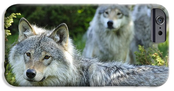 Wolf Photo iPhone Cases - Spirit of togetherness iPhone Case by Andy-Kim Moeller