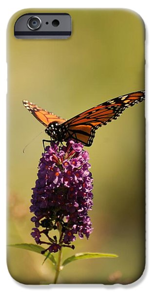 Sunlight On Flowers iPhone Cases - Spread Your Wings And Fly iPhone Case by Angie Tirado