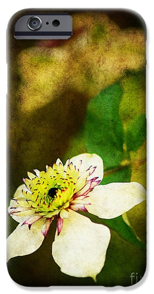 Spring Charm iPhone Case by Darren Fisher