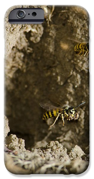SPRING CLEANING Pair of wasps carrying mud from a yellow-jacket wasps nest iPhone Case by Andy Smy
