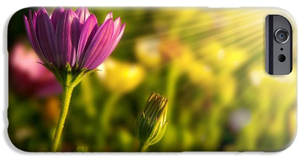 Agriculture iPhone Cases - Spring Flower iPhone Case by Carlos Caetano
