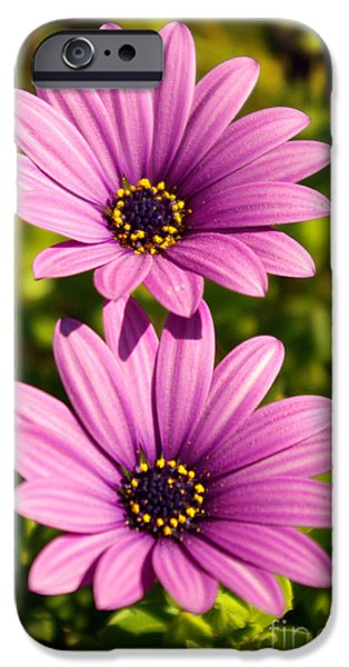 Agriculture iPhone Cases - Spring Flowers iPhone Case by Carlos Caetano