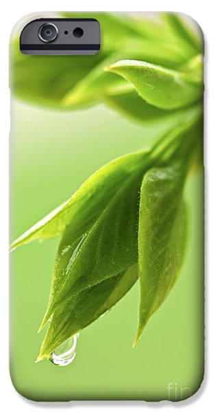 Spring iPhone Cases - Spring green leaves iPhone Case by Elena Elisseeva