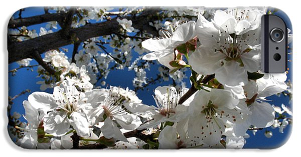 Fruit Tree Art Giclee iPhone Cases - Spring Pear Blossoms 2012 iPhone Case by Joyce Dickens