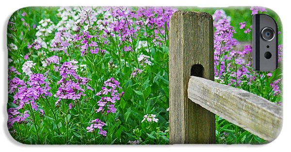 Phlox iPhone Cases - Spring Phlox 6074 iPhone Case by Michael Peychich
