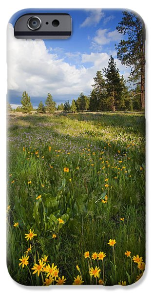 Meadow iPhone Cases - Spring Shadows iPhone Case by Mike  Dawson