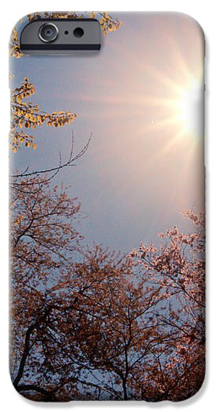 Spring Sunlight over Cherry Blossoms  iPhone Case by Vivienne Gucwa