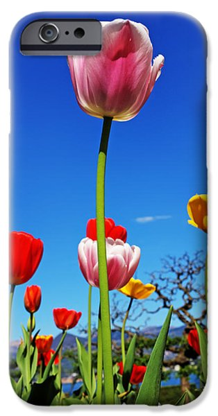 Spring iPhone Cases - Spring Time iPhone Case by Joana Kruse