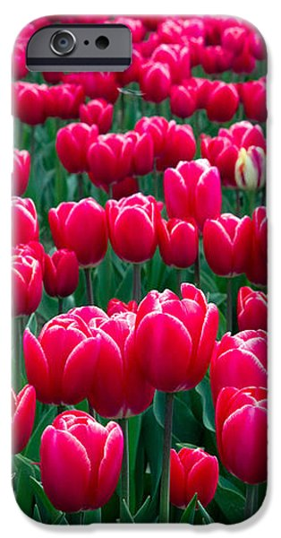 Spring Tulips iPhone Case by David R Frazier and Photo Researchers