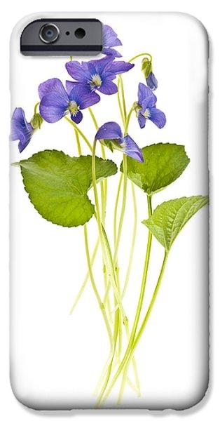 Violet Photographs iPhone Cases - Spring violets on white iPhone Case by Elena Elisseeva