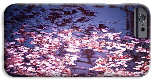 Cherry Blossoms Photographs iPhone Cases - Springs Embers - Cherry Blossom Petals on the Surface of a Pond iPhone Case by Vivienne Gucwa