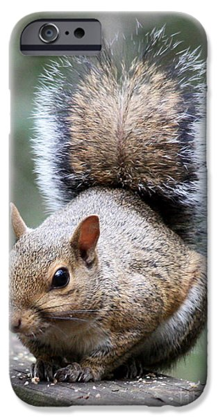 Animal Cards iPhone Cases - Squirrel iPhone Case by Carol Groenen