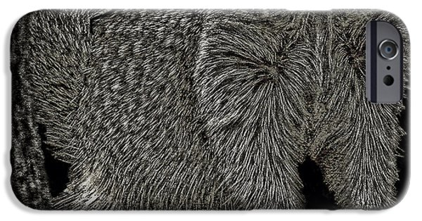 Fury Drawings iPhone Cases - Squirrel  iPhone Case by Debra     Vatalaro
