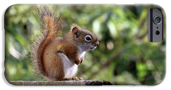 Bushy Tail iPhone Cases - Squirrel on the Edge iPhone Case by Marjorie Imbeau