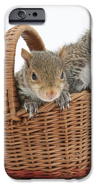 Squirrels In A Basket iPhone Case by Mark Taylor