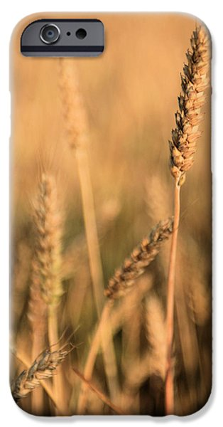 Farm Stand iPhone Cases - Standing Out in a Crowd iPhone Case by JC Findley