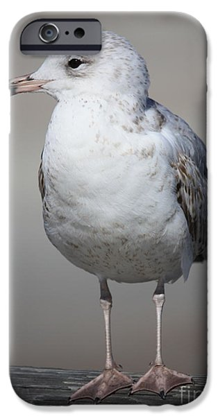 Seagull iPhone Cases - Standing Seagull iPhone Case by Carol Groenen