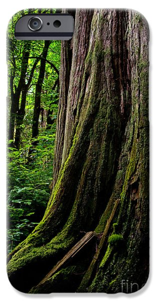 Stanley Park iPhone Cases - Stanley Park Trees 1 iPhone Case by Terry Elniski