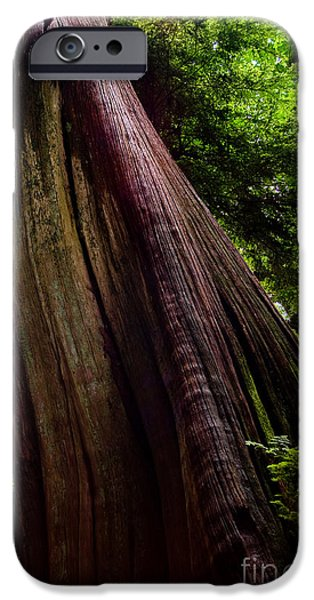 Stanley Park iPhone Cases - Stanley Park Trees 5 iPhone Case by Terry Elniski