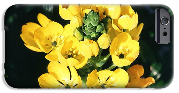Star Of Bethlehem iPhone Cases - Star Of Bethlehem iPhone Case by Science Source