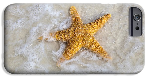 Starfish iPhone Cases - Starfish iPhone Case by Janet Fikar