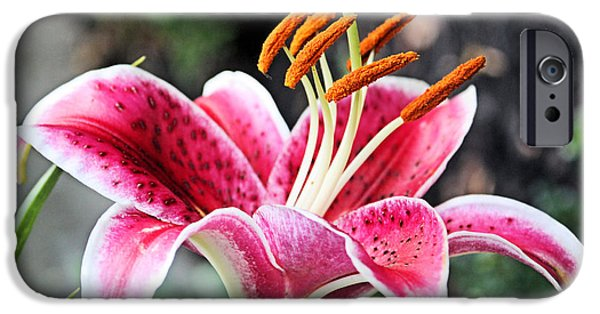 Asiatic Lily iPhone Cases - Stargazer Lily iPhone Case by Kristin Elmquist