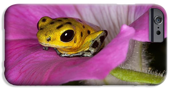 Frogs iPhone Cases - Stepping Out iPhone Case by Janet Fikar