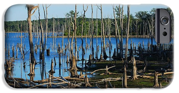 Tree Art Print iPhone Cases - Still Wood - Manasquan Reservoir iPhone Case by Angie Tirado
