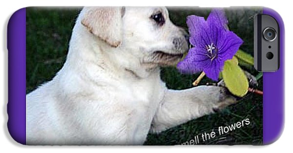 Puppies iPhone Cases - Stop and Smell the Flowers iPhone Case by Linda Galok