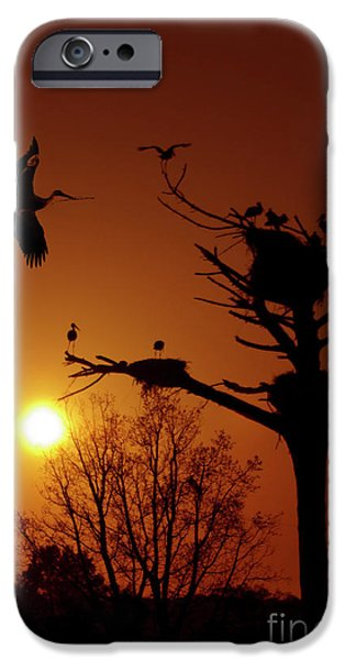 Stork iPhone Cases - Storks iPhone Case by Carlos Caetano