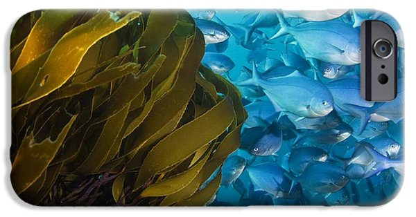 Straps iPhone Cases - Strap Kelp And Blue Maomao iPhone Case by Matthew Oldfield