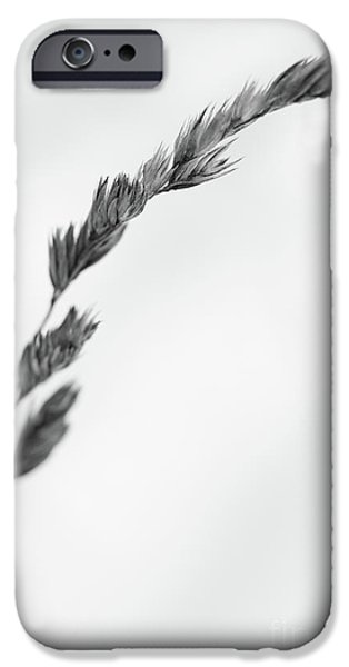 Best Sellers -  - Wintertime iPhone Cases - Straw iPhone Case by Gabriela Insuratelu