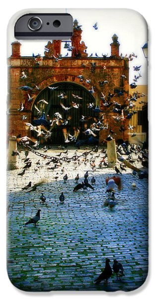 Pigeon iPhone Cases - Street Pigeons iPhone Case by Perry Webster
