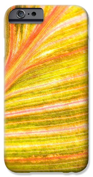 Striped Leaf iPhone Case by Bonnie Bruno