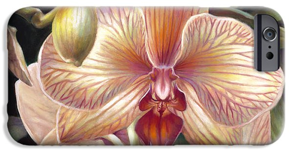 Phalaenopsis iPhone Cases - Striped Peach Orchid iPhone Case by Nancy Tilles